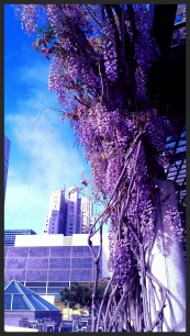 I was drooling over the flowers in the Yerba Buena Gardens