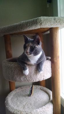 our cat Lila | Rachel Running Wild blog