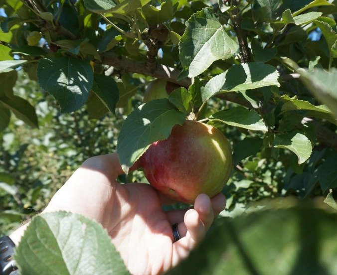 Wilson's Apple Orchard in Iowa City, Iowa